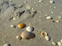 Conchas marinas en arena fotos de archivo