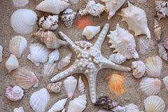 Conchas marinas en arena Fotografía de archivo libre de regalías