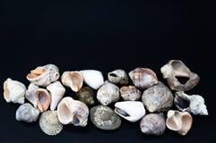 Conchas marinas en el negro Fotografía de archivo libre de regalías