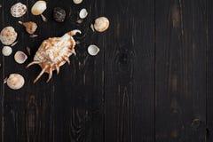 Conchas marinas en fondo de madera Foto de archivo