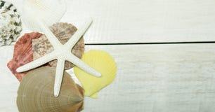 Conchas marinas en fondo de madera del marco imagen de archivo