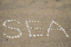 Conchas marinas en la arena Foto de archivo libre de regalías