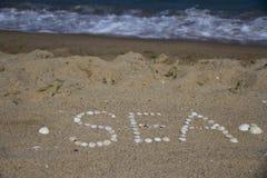 Conchas marinas en la arena Fotos de archivo libres de regalías
