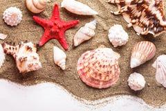 Conchas marinas en la arena foto de archivo
