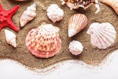 Conchas marinas en la arena imagen de archivo