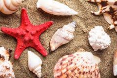 Conchas marinas en la arena imágenes de archivo libres de regalías