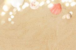 Conchas marinas en la arena de la playa fotos de archivo