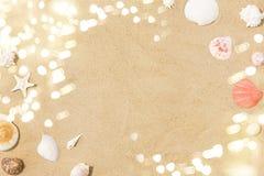 Conchas marinas en la arena de la playa imagen de archivo libre de regalías