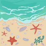 Conchas marinas en la orilla Foto de archivo libre de regalías