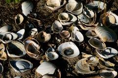 Conchas marinas en la orilla Fotografía de archivo libre de regalías