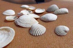 Conchas marinas en la piel Foto de archivo