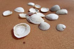 Conchas marinas en la piel 2 Imágenes de archivo libres de regalías