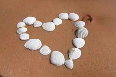 Conchas marinas en la piel 3 Fotos de archivo