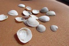 Conchas marinas en la piel 5 Fotos de archivo