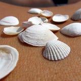 Conchas marinas en la piel 6 Imagen de archivo libre de regalías