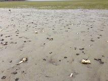 Conchas marinas en la playa Imagen de archivo libre de regalías