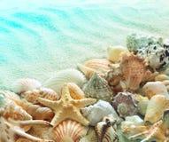 Conchas marinas en la playa del verano con la arena fotografía de archivo libre de regalías