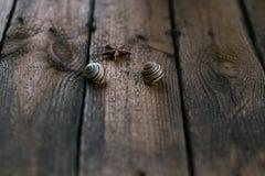 Conchas marinas en la tabla Foto de archivo