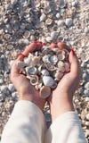 Conchas marinas en las manos del ` s de la muchacha Foto de archivo libre de regalías