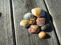 Conchas marinas en muelle fotografía de archivo libre de regalías