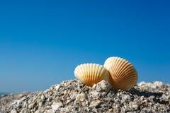 Conchas marinas en roca Fotos de archivo