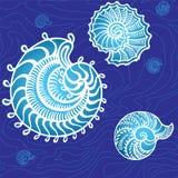 Conchas marinas en un fondo Foto de archivo
