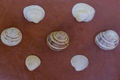 Conchas marinas en un fondo marrón Fotografía de archivo