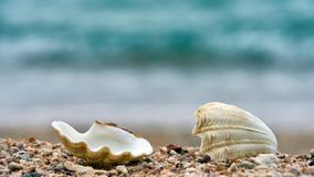 Conchas marinas en una playa de Ko Tao Imagenes de archivo