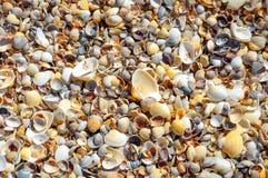 Conchas marinas en una playa y una arena del verano como fondo S imagen de archivo