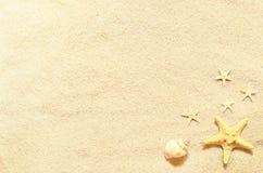 Conchas marinas en una playa y una arena del verano como fondo Shelles del mar imagenes de archivo