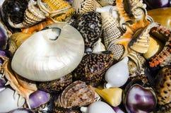 Conchas marinas exóticas Fotografía de archivo