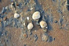 Conchas marinas fondo y contextos en la playa imagen de archivo