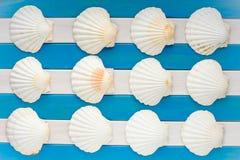Conchas marinas grandes en fondo marino de madera fotografía de archivo libre de regalías