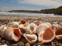 Conchas marinas hermosas de la costa de mar Rapa Imagen de archivo