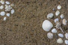 Conchas marinas hermosas en la arena con el espacio de la copia imagen de archivo