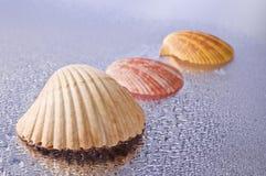 Conchas marinas mojadas Fotografía de archivo libre de regalías