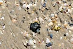 Conchas marinas mojadas en la playa de la arena en el verano Foto de archivo libre de regalías