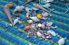 Conchas marinas para hacer los ornamentos fotos de archivo libres de regalías