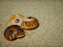 Conchas marinas por la orilla Fotografía de archivo libre de regalías
