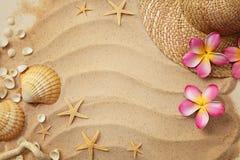 Conchas marinas y arena fotografía de archivo libre de regalías