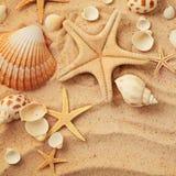 Conchas marinas y arena fotos de archivo
