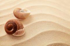 Conchas marinas y arena imagen de archivo