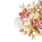 Conchas marinas y arena imágenes de archivo libres de regalías