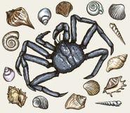 Conchas marinas y cangrejo del mar Ilustración del vector Foto de archivo