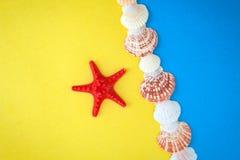 Conchas marinas y colección exóticas de las estrellas de mar imagenes de archivo