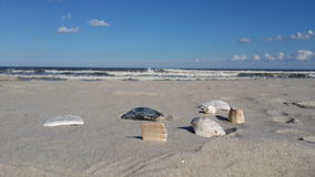 Conchas marinas y el océano Fotos de archivo