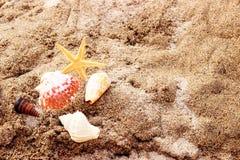 Conchas marinas y estrellas de mar Fotos de archivo libres de regalías
