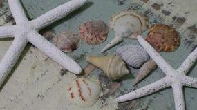 Conchas marinas y estrellas de mar Fotos de archivo