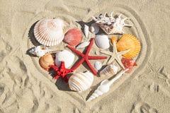 Conchas marinas y estrellas de mar imágenes de archivo libres de regalías
