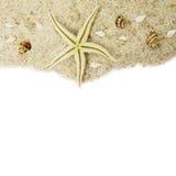 conchas marinas y estrellas de mar en la arena imagenes de archivo